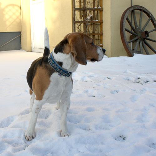 LISSA im Schnee