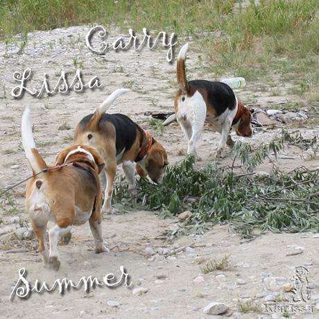 """meine """"Beaglegang"""", Sommer  2011"""