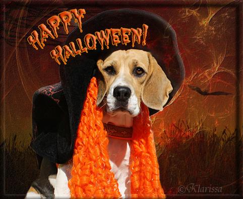 Halloweenbeagle Lissa
