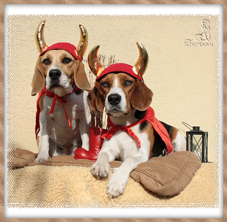 Krampus-Beagles