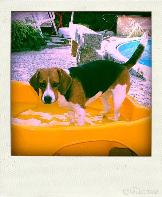 CARRY in ihrem Pool im Garten...