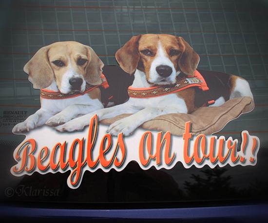 Beagle-Aufkleber