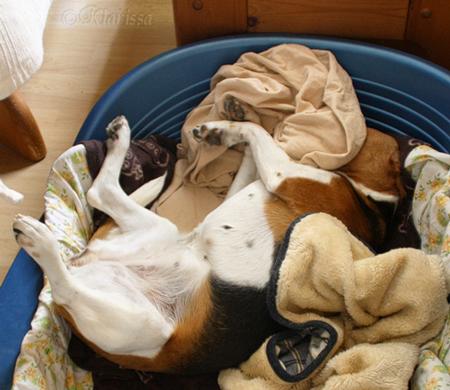 Wachhund Carry