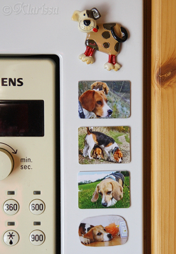 Beagle-Magnete