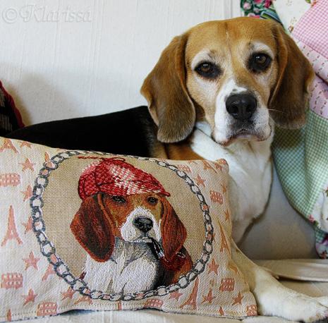 LISSA & Beaglepolster