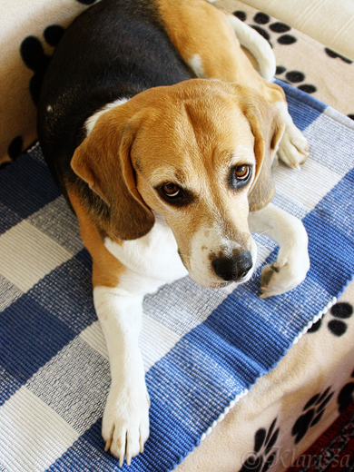 LISSA-Beagle