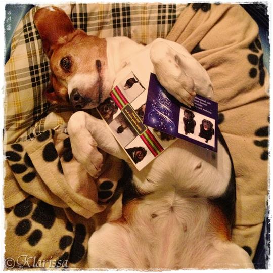 Weihnachtskarten für den Beaglehaushalt