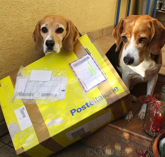 Wichtlpackerl für die Beagles?