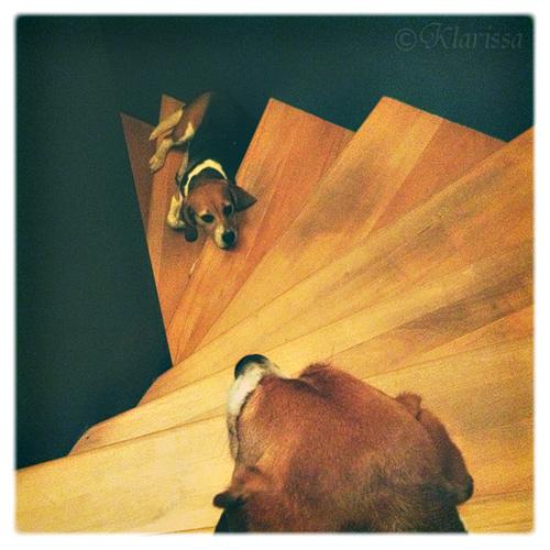 auf den Stufen im Stiegenhaus