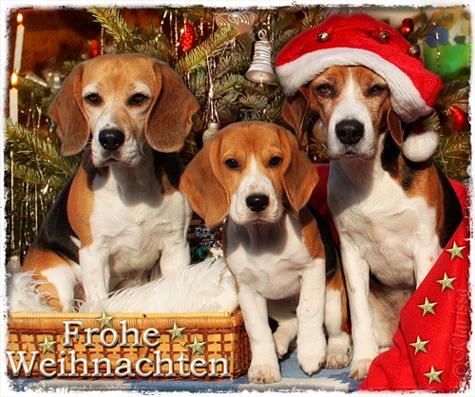 Beagleweihnacht 2013