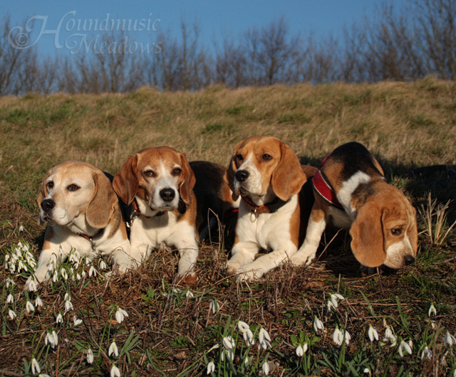 Lissa, Carry, Dana, Marcie, März 2016