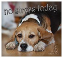 no-stress-Lissa