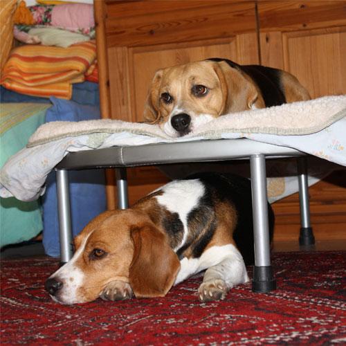 Trampolin als Hundestockbett