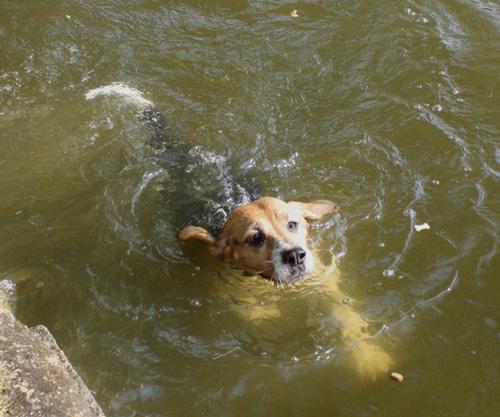 na klar kann die LISSA schwimmen!