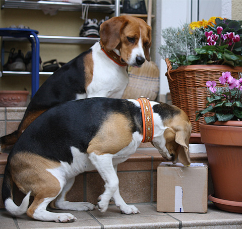 Post für die Beagles?