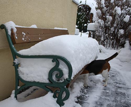 Schnee im Vorgarten...