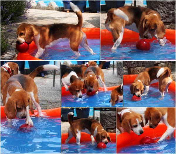 Wasserball im Hundepool, 2014