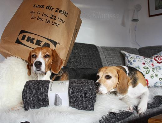Frauchen war bei IKEA