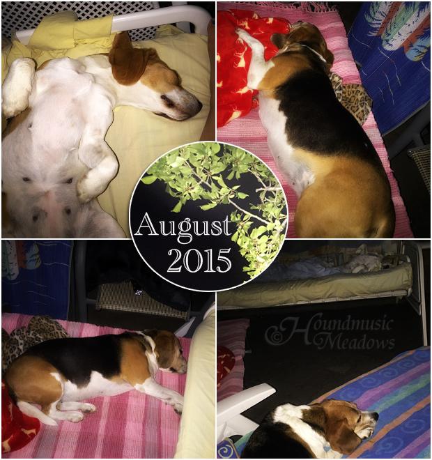 Schlafen unter freiem Himmel im August
