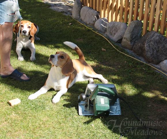 Baustellenhunde