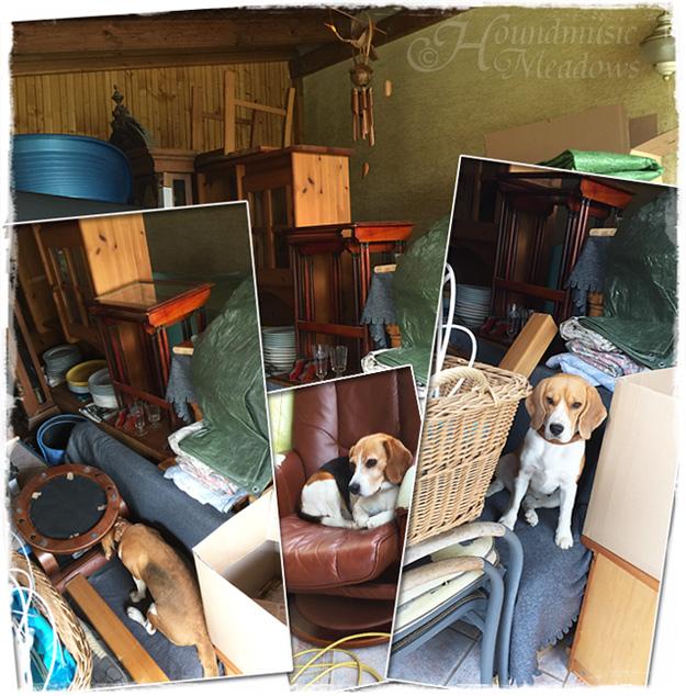 stillleben mit beagles