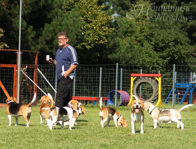 Herrchen zwischen den Beagles