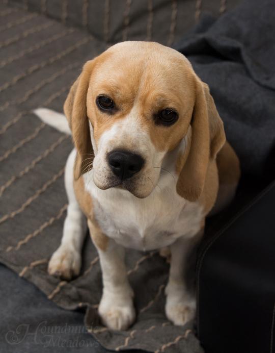 Marcie, 1 Jahr jung