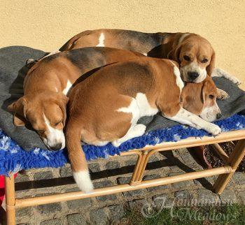 Sonnenbad... Dana, Ziva, Marcie